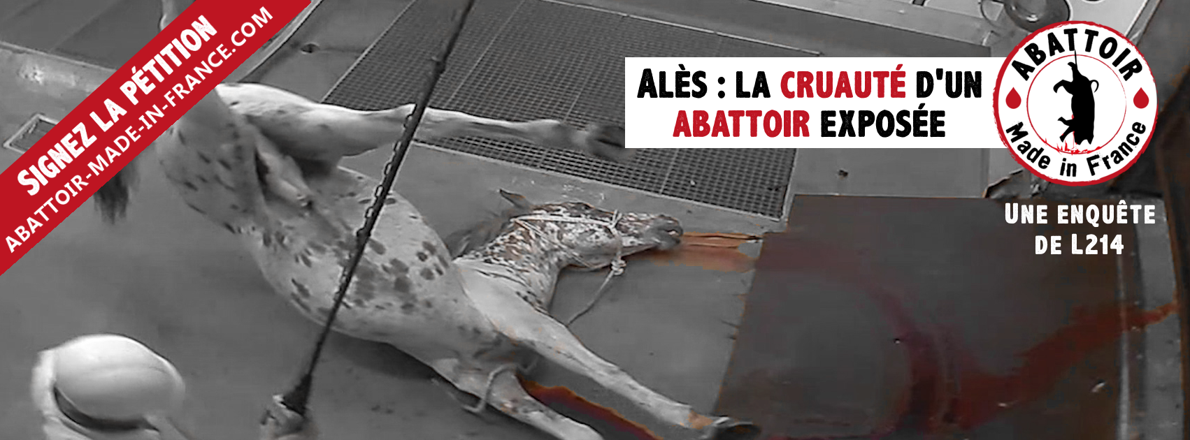 Chevaux découpés vivants, cochons gazés, moutons égorgés en pleine conscience, les images choc de l'abattoir d'Alès [Vidéo] 2015-10-13-abattoir-made-in-france-couv-facebook-851
