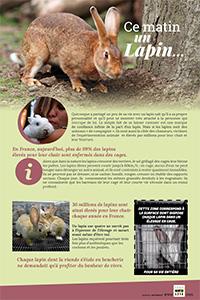 Découvrez les lapins