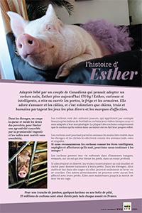 Cochon comme Ester ?
