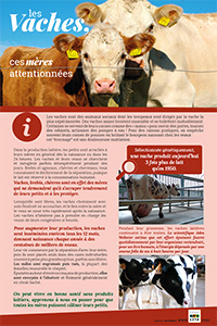 Vaches et veaux : le lait, souffrances insoupçonnées