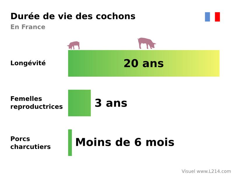 Monoprix sch mas thique et animaux for Duree de vie des poules pondeuses
