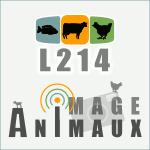 Images d'animaux dans les élevages et abattoirs