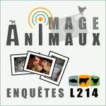 Images d'enquêtes dans les élevages et abattoirs