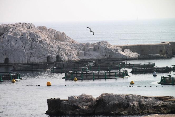 aquaculture, France