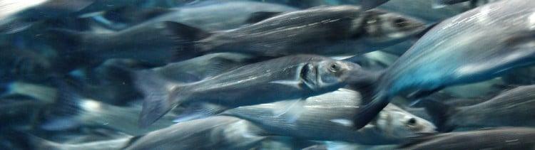 Bannière Les poissons et moi...