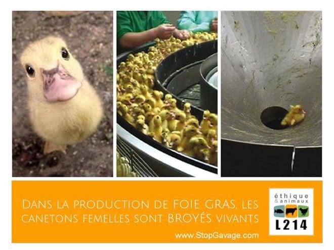 M 233 Tro De Paris Nos Affiches Refus 233 Es Blog L214