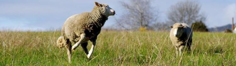 """Bannière Elle photographie des animaux """"de ferme"""" en refuge : des images rares et précieuses"""