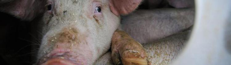 Bannière Détresses animales