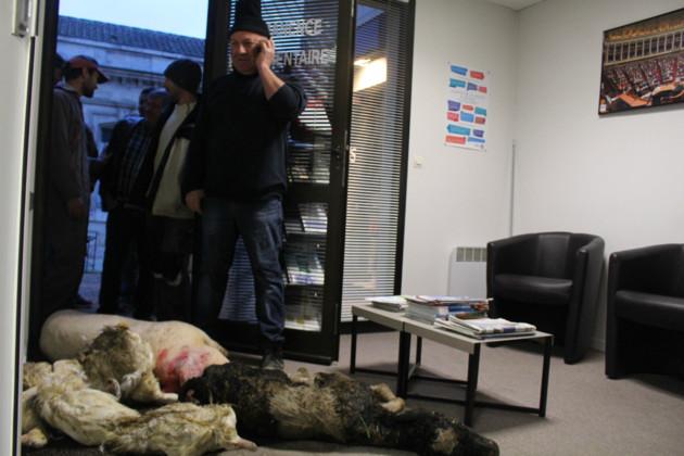 animaux morts dans le bureau de la députée Régine Poveda