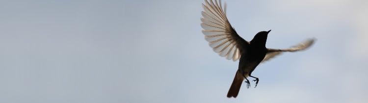 Bannière Liberté ! Un poème de Victor Hugo pour les oiseaux