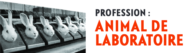 Bannière Profession : animal de laboratoire