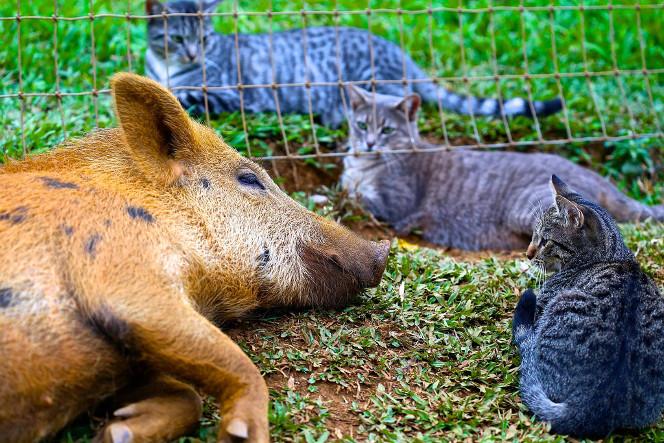 Berney et trois chats