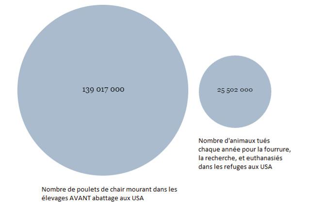 nombre de poulets morts en élevage comparé au nombre d'animaux tués pour la fourrure, la recherche, et dans les refuges