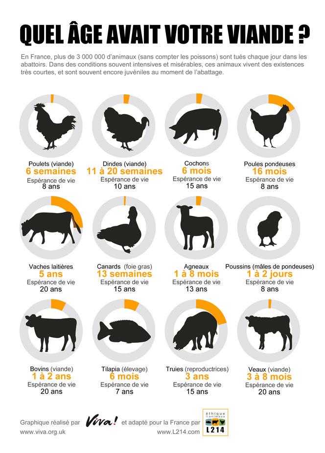 Graphiques représentant l'âge auquel les animaux sont tués pour être mangés