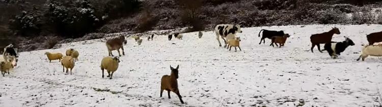 Bannière Les animaux d'un refuge courent de joie dans la neige !