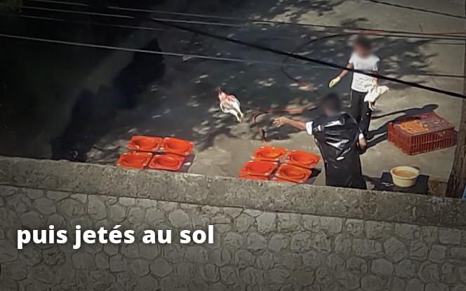 poulets tués puis jetés au sol, Kapparot
