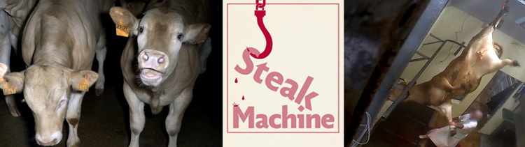 Bannière Steak Machine