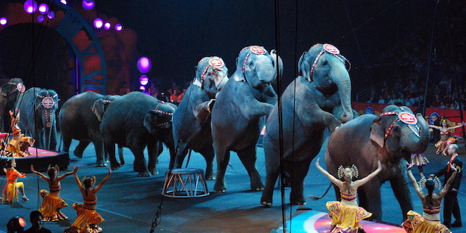 Numéro d'éléphants dans un cirque