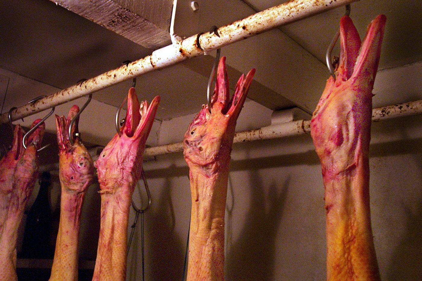 Canards tués à l'abattoir pour le foie gras