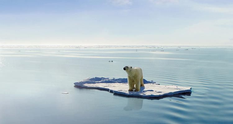 Ours sur un bloc de glace à la dérive