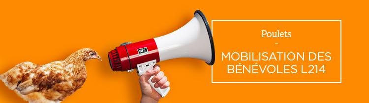 Bannière #800millions : mobilisation des bénévoles L214 !