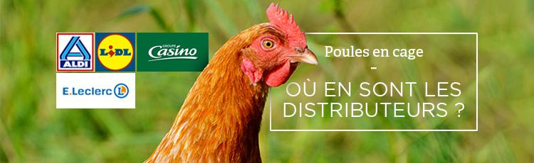 Bannière Œufs de poules en cage : quels distributeurs sont engagés ?