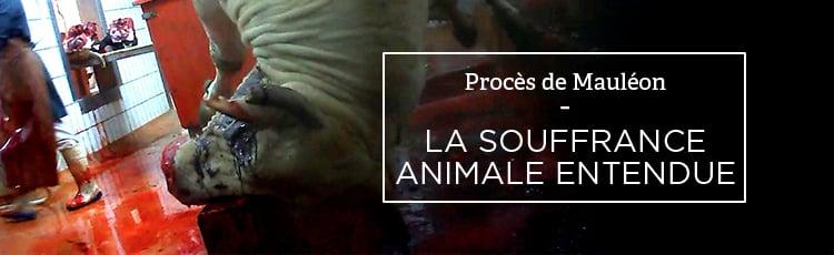 Bannière Procès de Mauléon : la souffrance animale entendue