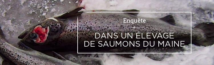 Bannière La pisciculture, un autre visage de l'élevage intensif