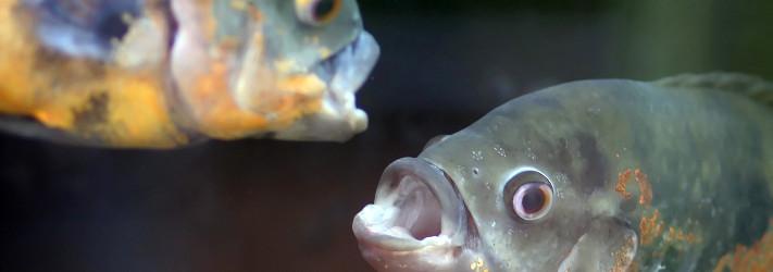 Les poissons ont un environnement sensoriel riche et varié.