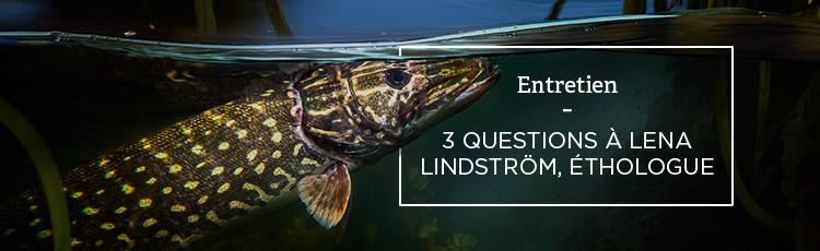 Bannière 3 questions à Lena Lindström, éthologue