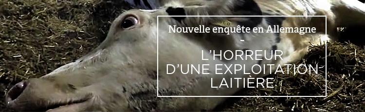 Bannière Terreur dans une exploitation de vaches laitières en Bavière