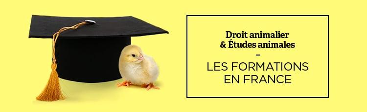 Bannière Droit animalier & études animales: les formations en France