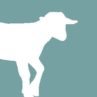 Quels droits pour les animaux