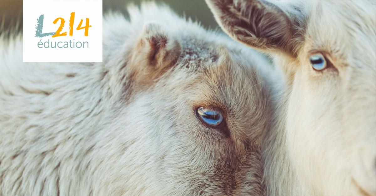 Éthique animale : éloge de la sensibilité