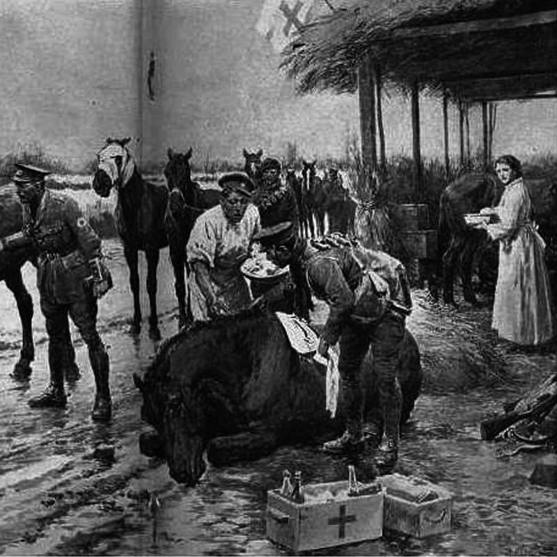 Un hopital pour chevaux (gravure)