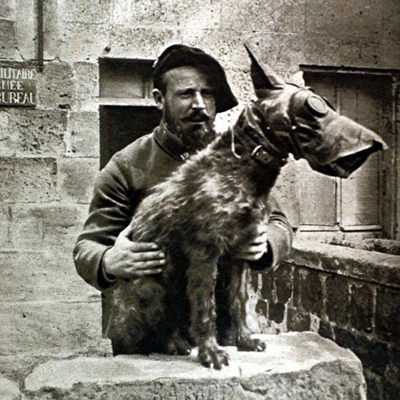 Le chien Satan a transmis un message qui a sauvé la vie d'un régiment
