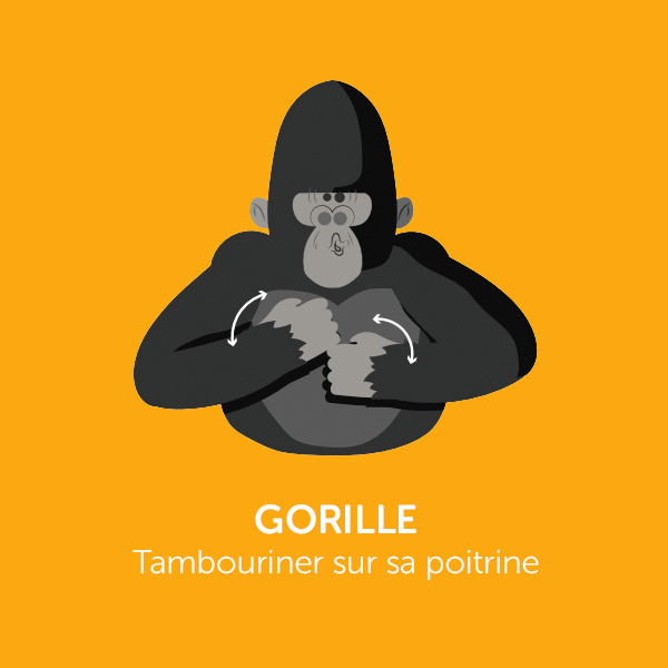 Parle comme Koko : GORILLE