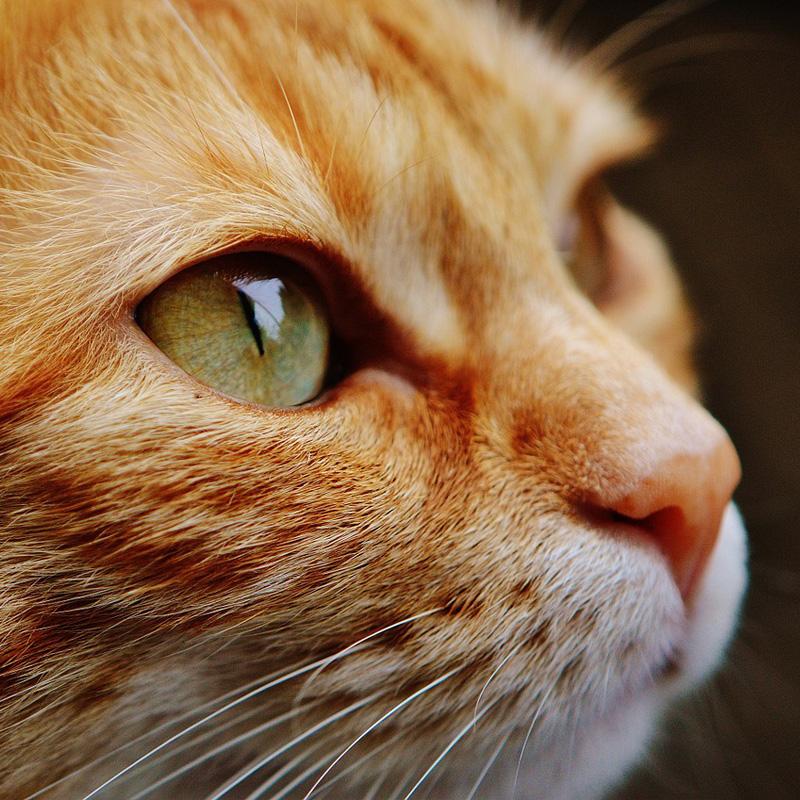La stérilisation des chats limite les abandons