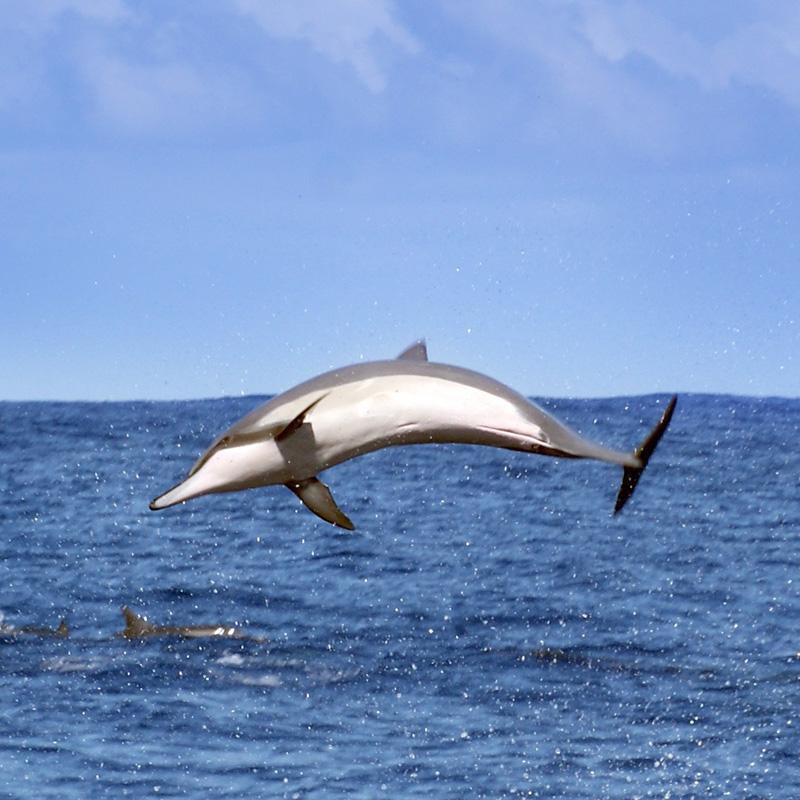 Interdiction des mammifères marins dans les parcs aquatiques en Wallonie