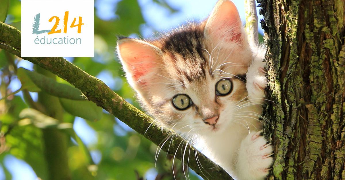 Belgique : de nouvelles lois pour protéger les animaux