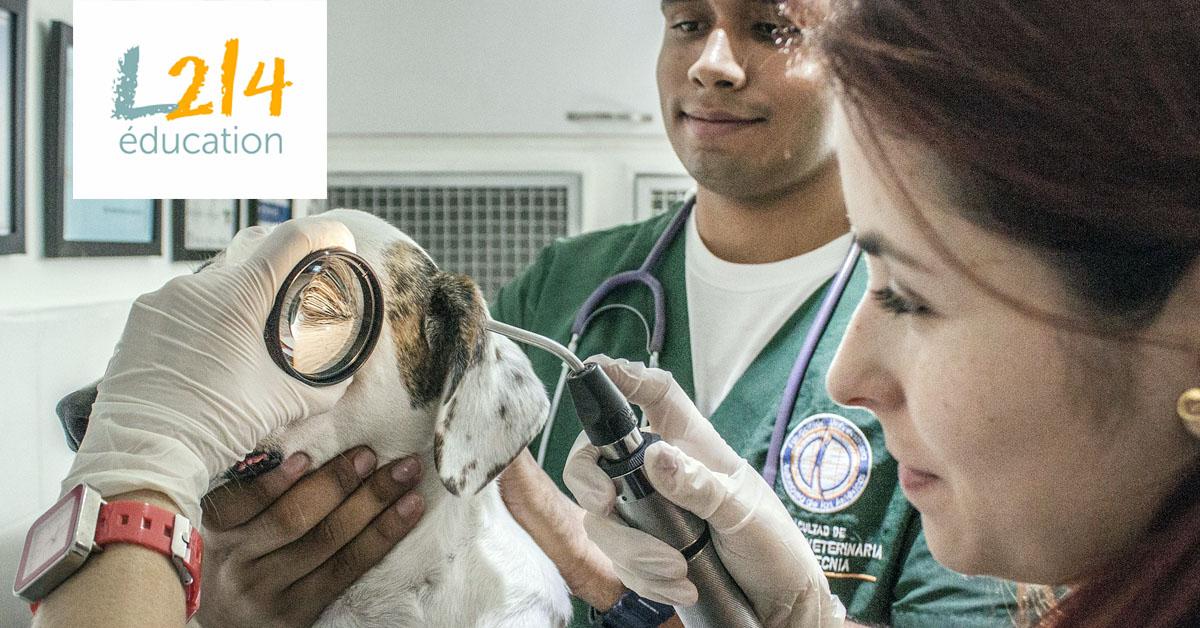 MÉTIER : Plus tard je voudrais être... vétérinaire !