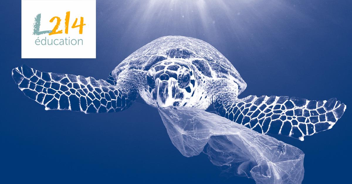 DOSSIER #2 : Un océan de plastique