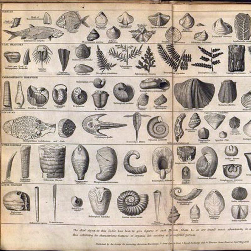 Une planche dessinée dans 'L'origine des espèces'