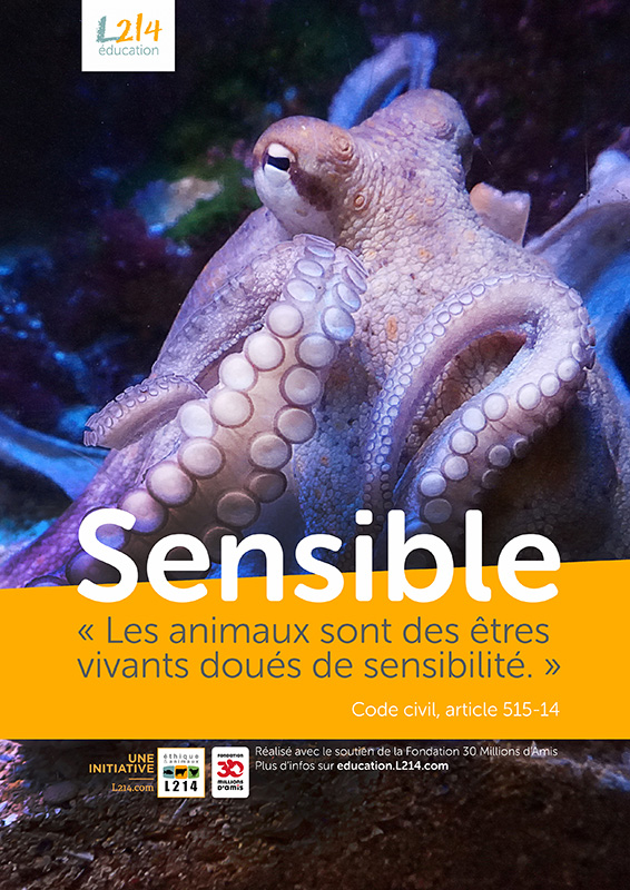 Poster « Sensible » n°6