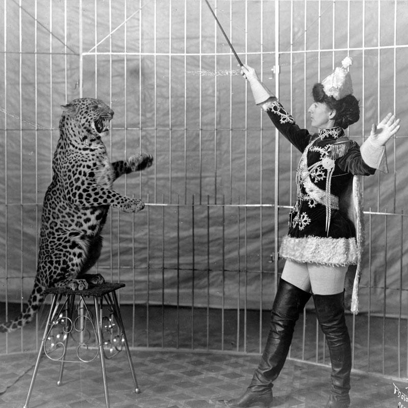 En Grande-Bretagne, les cirques avec animaux sauvages sont interdits.