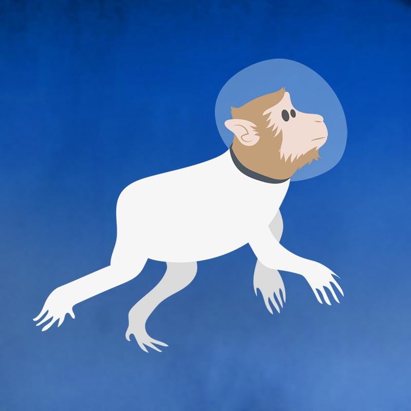 1948 : le macaque Albert 1er est envoyé dans l'espace (USA)