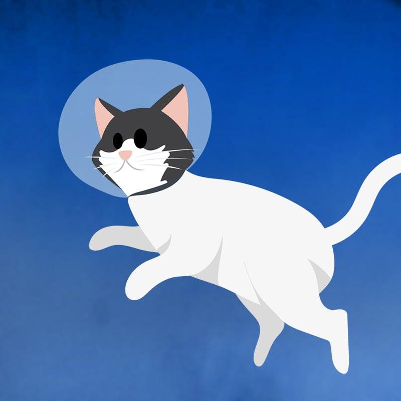 1963 : Félicette est le premier chat envoyé dans l'espace (France)