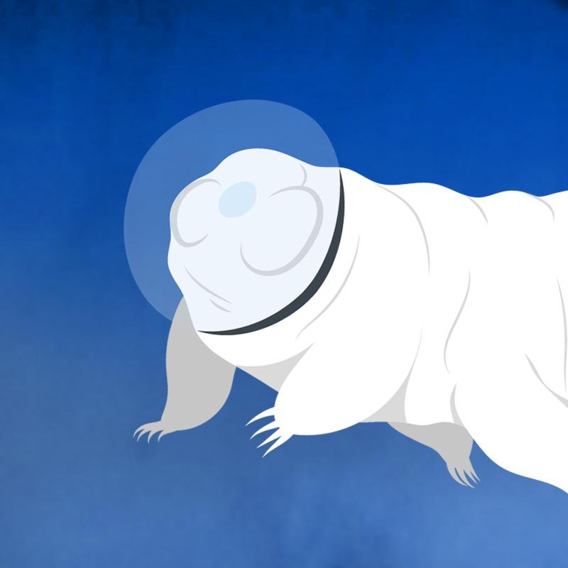 2007 : des tardigrades survivent 10 jours dans le vide spatial !