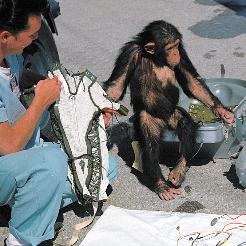 Le chimpanzé Ham et sa combinaison spatiale (USA)
