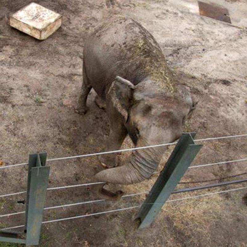 Au zoo du Bronx (New York), Happy vit seule dans son enclos depuis 2006.